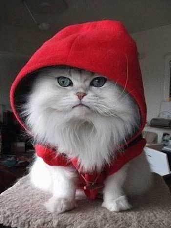 A Pet Cat?